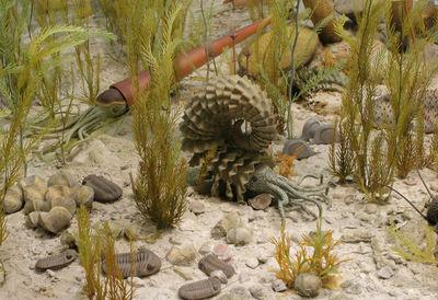 Łąka ramienionogowa/ źródło: University of Michigan Exhibit Museum of Natural History