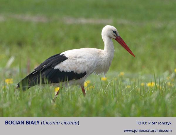 Ptaki Jako Bioindykatory Zmian Klimatu